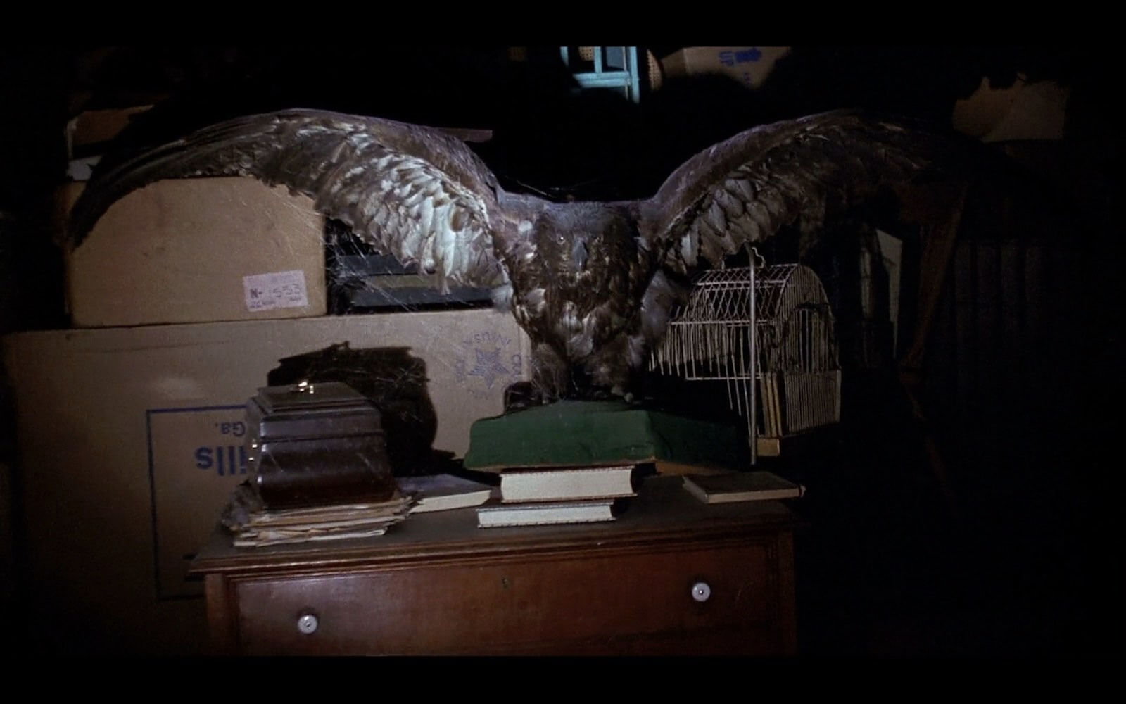eagle-wing-silence