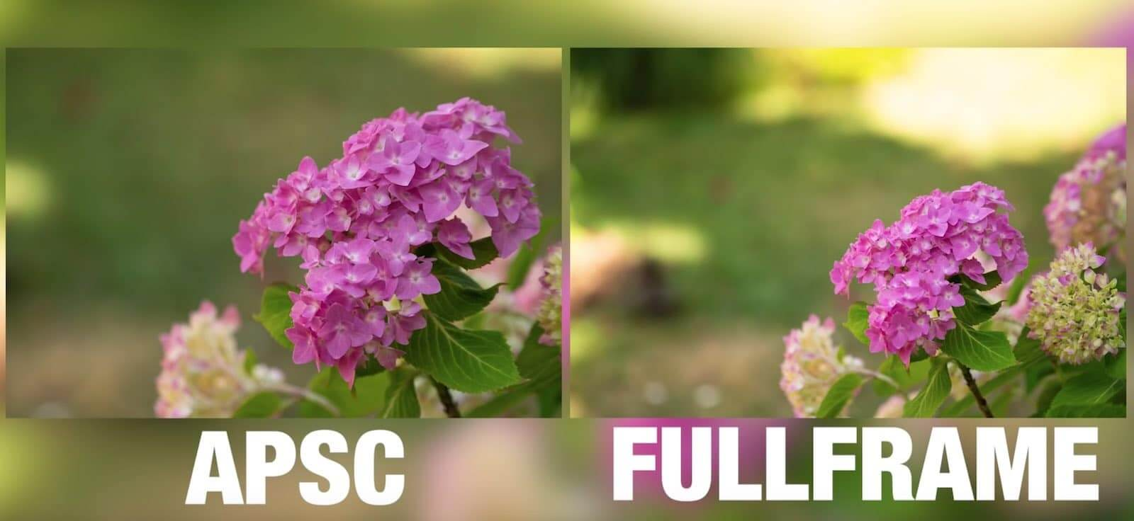 Camera Sensor Size Explained - ASP C vs Full Frame - Shallow Depth of Field