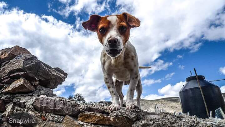 What is Deep Depth of Field - Dog Example