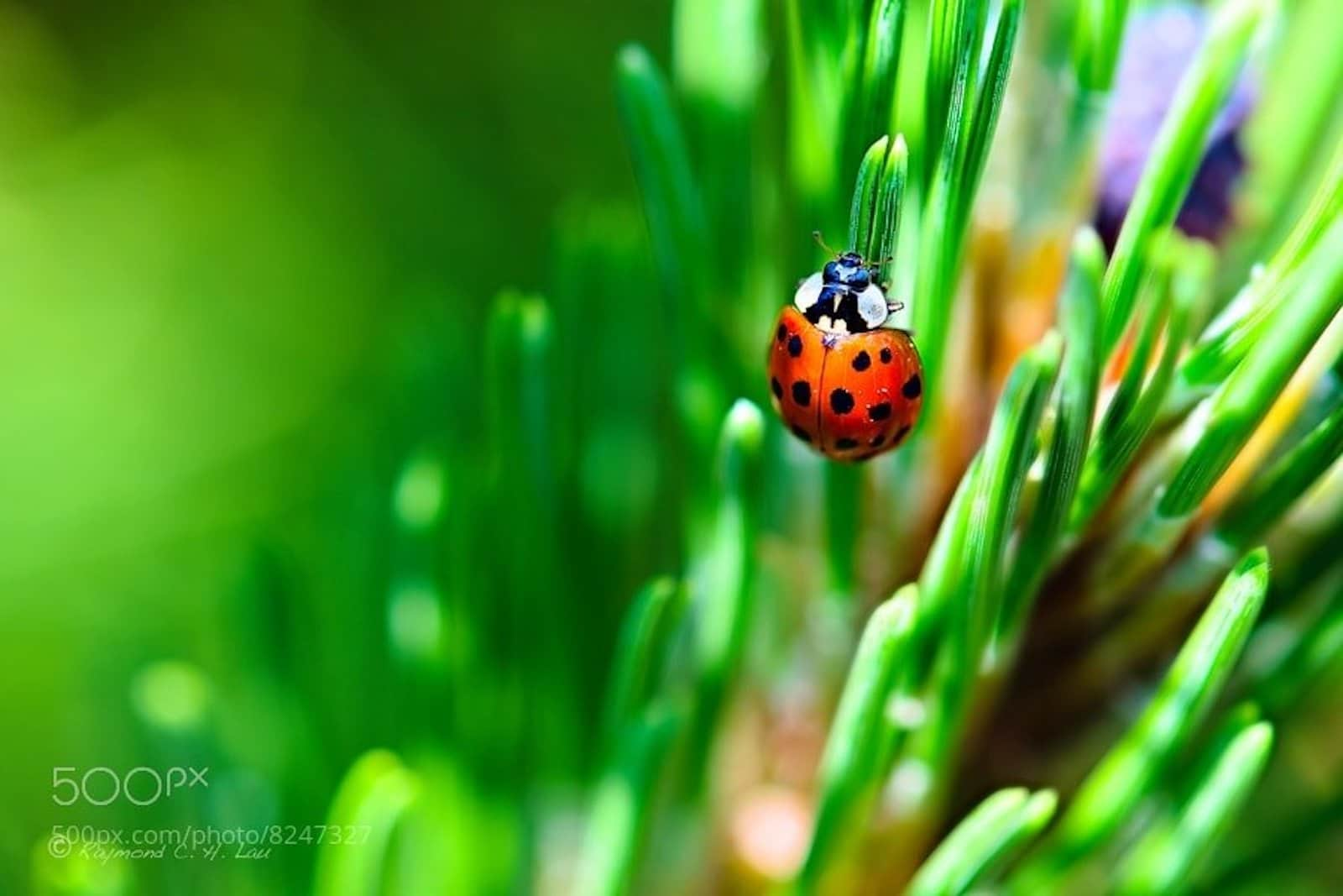 What is Depth of Field - Shallow Depth of Field Example - Image