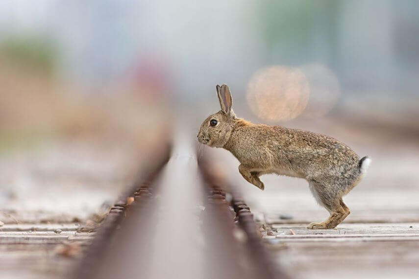What is Shallow Depth of Field - Shallow Depth of Field Example - Rabbit