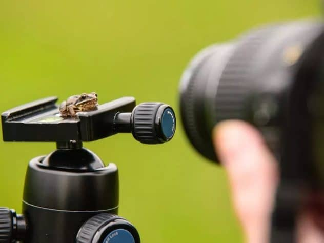 What is a Macro Lens - Featured - StudioBinder