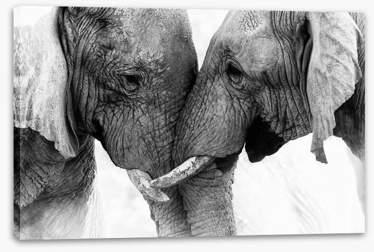 Black and white art of animals