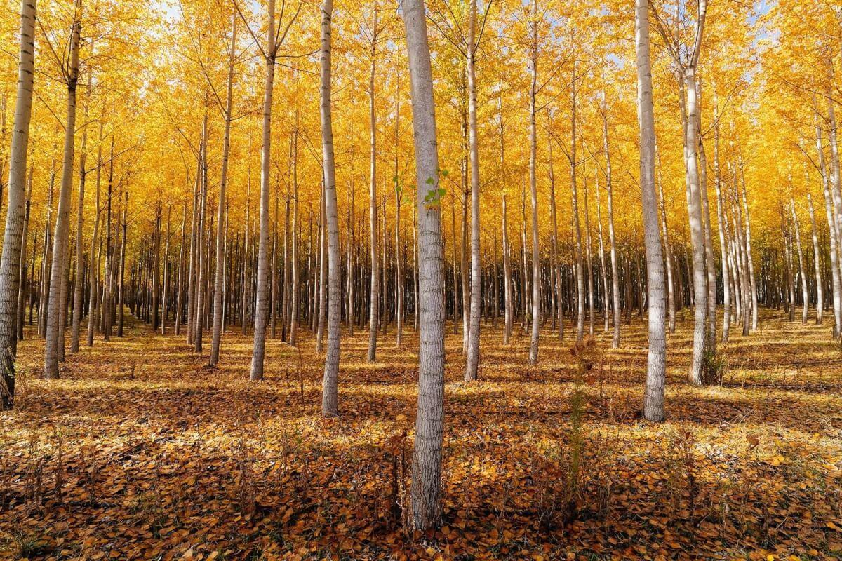 Creative Picture Ideas - Landscape Picture by Brian Matiash