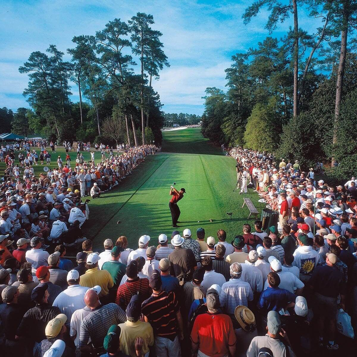Sports Pictures - Tiger Woods Tees Off at The Masters - Fred Vuich